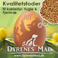 DyrenesMad_fuglefoder